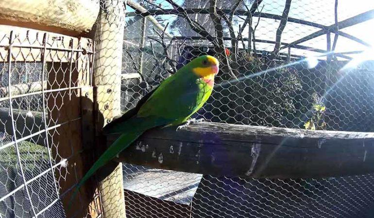 Parc ornithologique du Pont du Grau